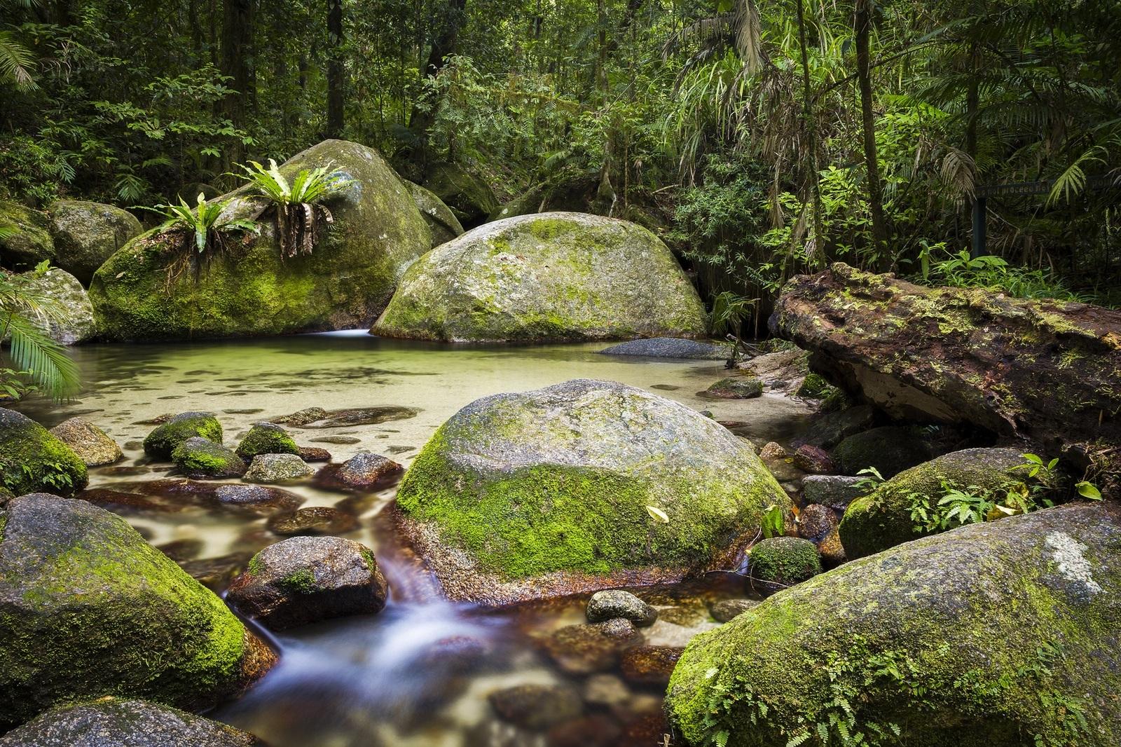 Daintree related keywords daintree long tail keywords for Australian rainforest