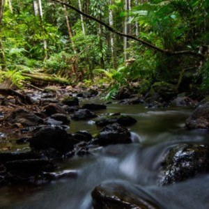 daintree-rainforest