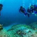 scuba dive and snorkel