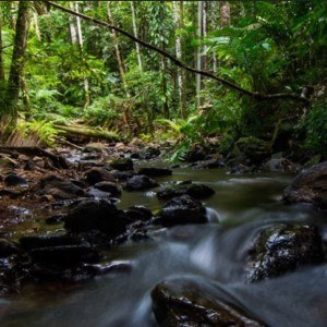 Daintree Bloomfield Track 4WD Adventure