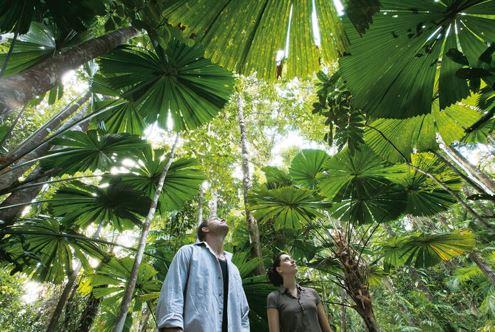 Daintree national park rainforest walk