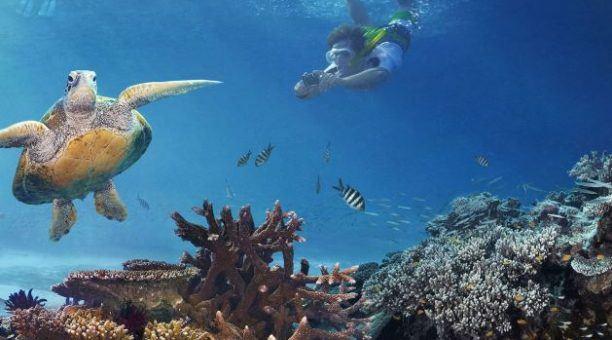 Great Barrier Reef adventure