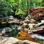 Cairns Rainforest Safari Tour