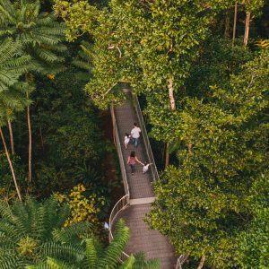 Mamu Tropical Skywalk